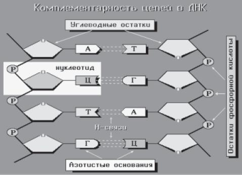 Схема взаимодействия двух