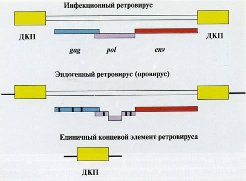 Типичные гены ретровирусов