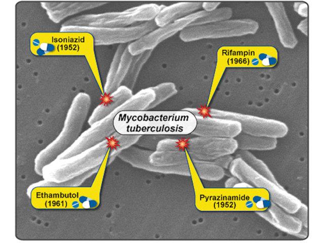 Микобактерии